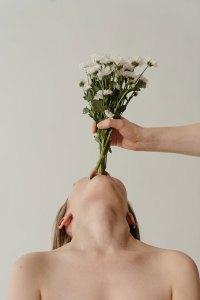 manger des chrysanthemes
