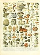 champignons-identification