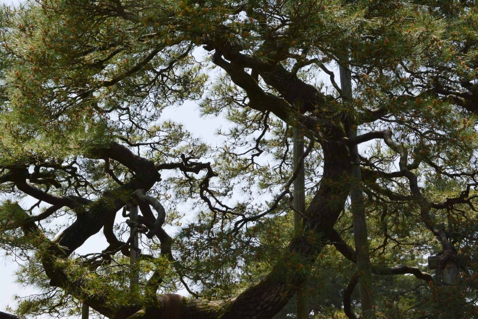 Le jardin japonais Kenroku-en, l'un des trois plus beaux du Japon à Kanazawa dans les Alpes Japonaises