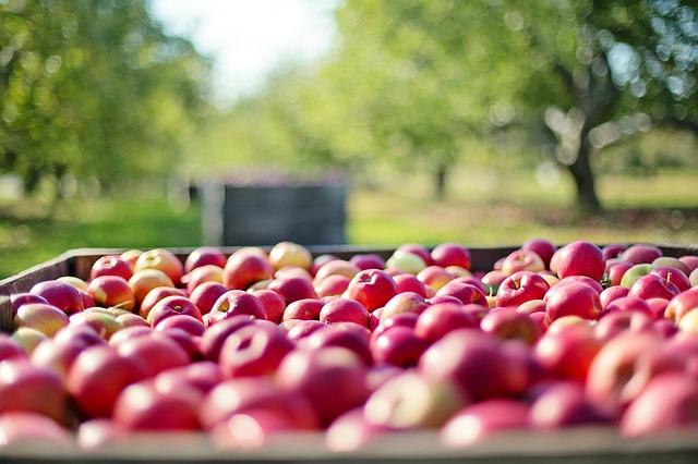bac de pommes