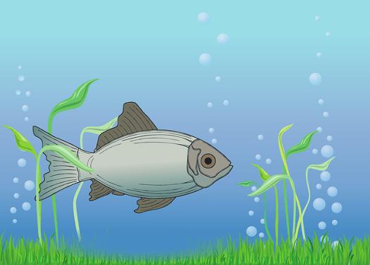 poisson dessin