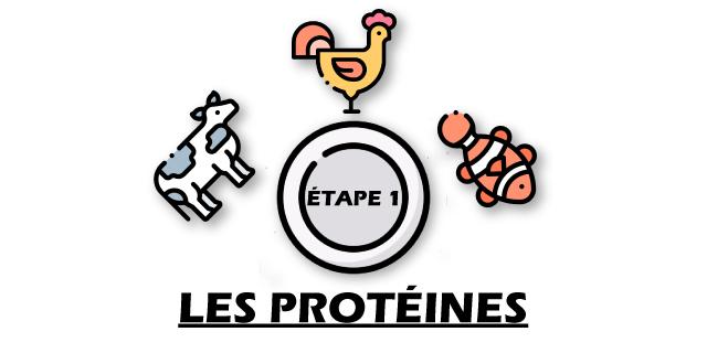 les protéines