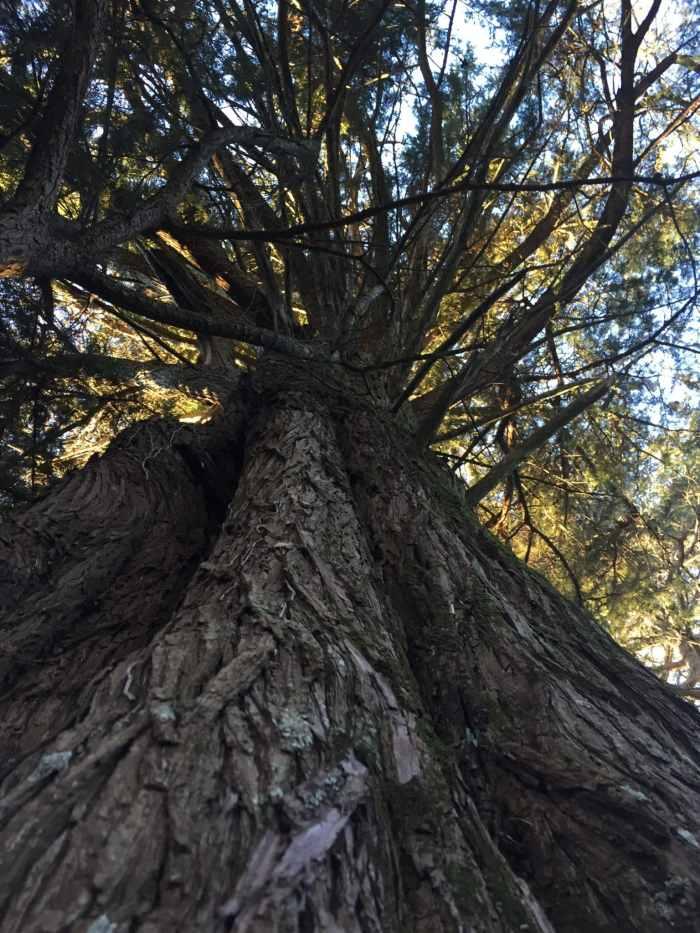 Je suis mon arbre