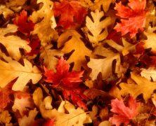 Poésies sur le thème de l'automne