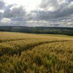 L'agriculture, toujours dans les petits papiers de l'Europe