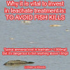 leachate-fish-kill