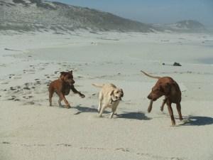 Labrador Rescue, South Africa