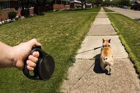 Why NOT use retractable, variable length leashes?