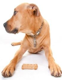 bigstock-dog-profile-by-bone-treat-25727306