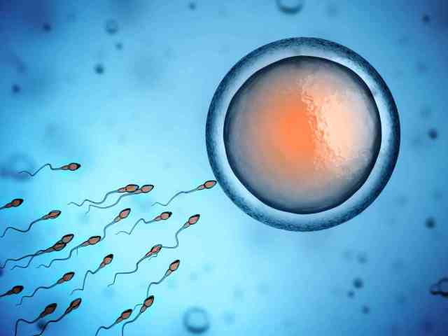 Fertilization (IVF)