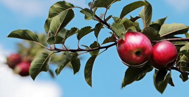fruit tree - be a better servant leader