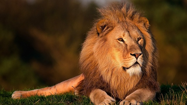 7 Servant Leadership Principles from the Book of Daniel