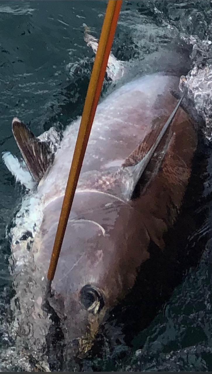 UK-Bluefin-tuna