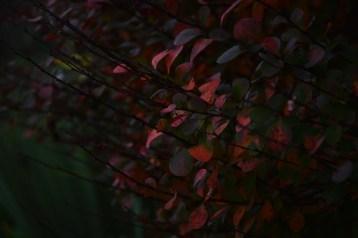 2016-10-31-autumns-dead-leaves-10