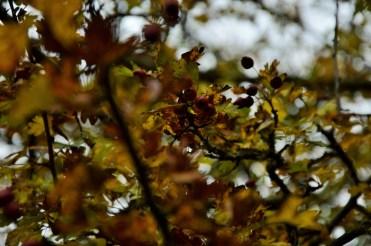 2016-10-31-autumns-dead-leaves-3