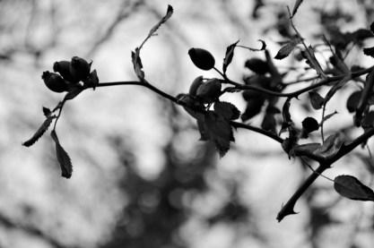 2016-10-31-autumns-dead-leaves-9