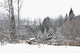 winter-in-the-vosges-5