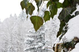 winter-in-the-vosges-7