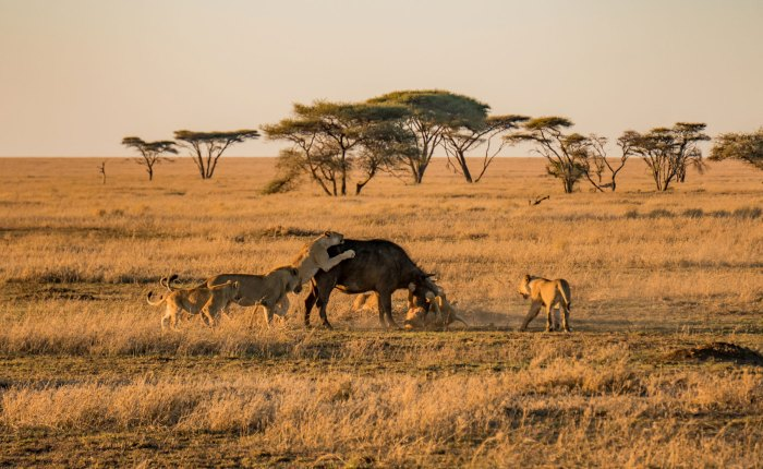 Best of North Tanzania