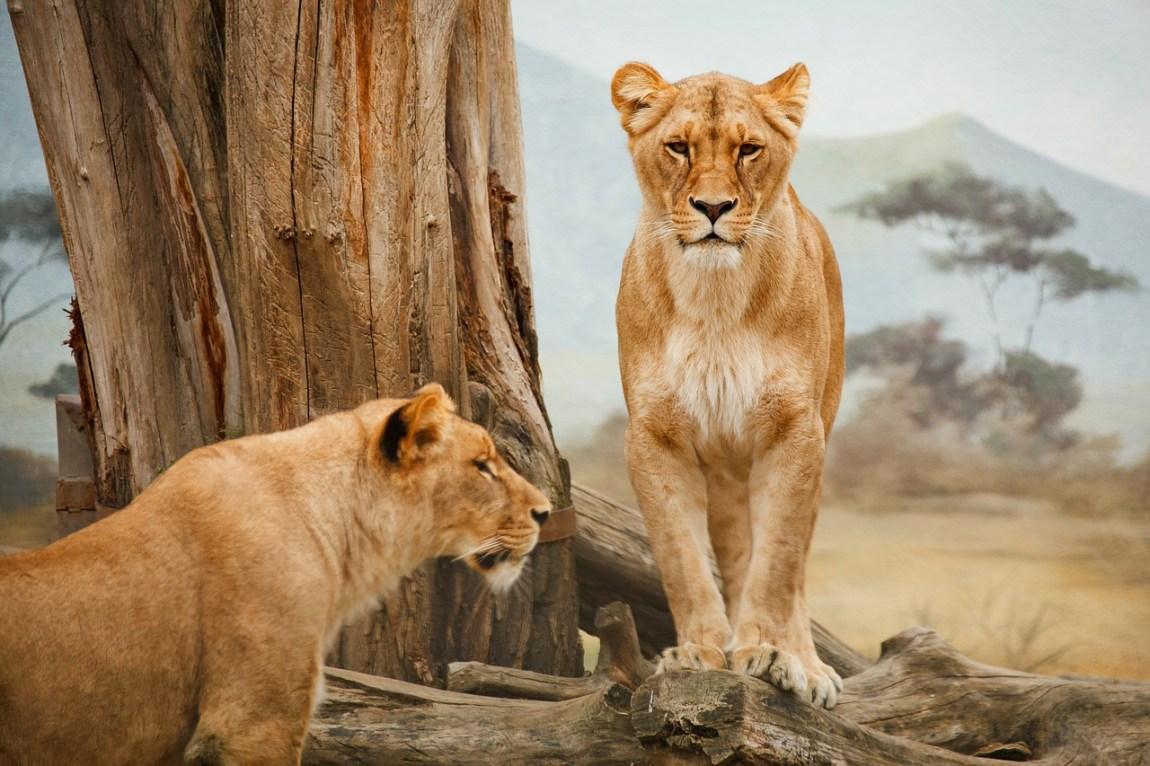 Kenya Safari - First class accommodation