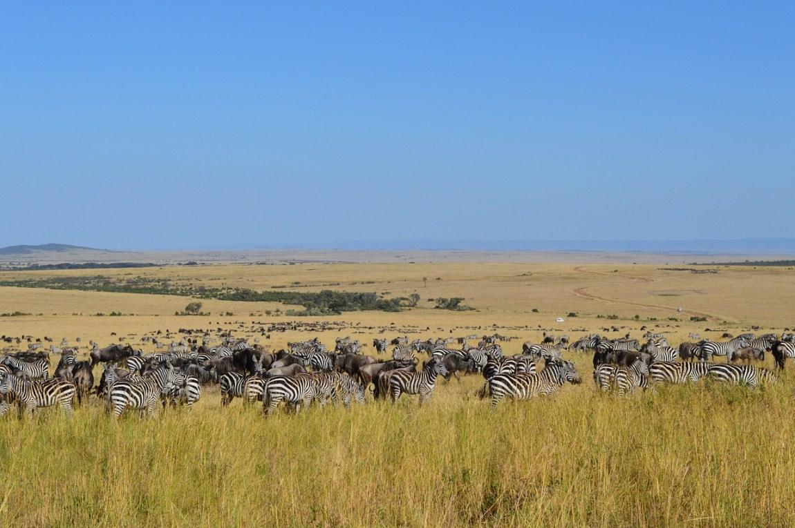 Kenya Safari - Jaw-dropping wildlife & birdlife