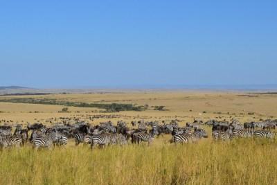 Kenya Safari Jaw Dropping Wildlife