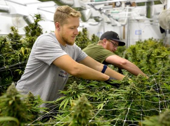 Cannabis Industry Offers Marijuana Jobs for Veterans