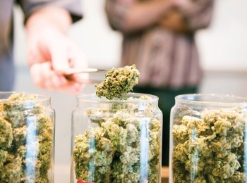Marijuana Retailers Suing Lewis County Over Business Ordinance
