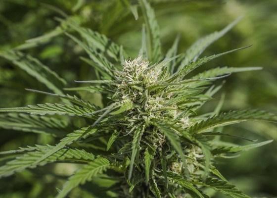 Pennsylvania Calls for Legalization of Recreational Marijuana