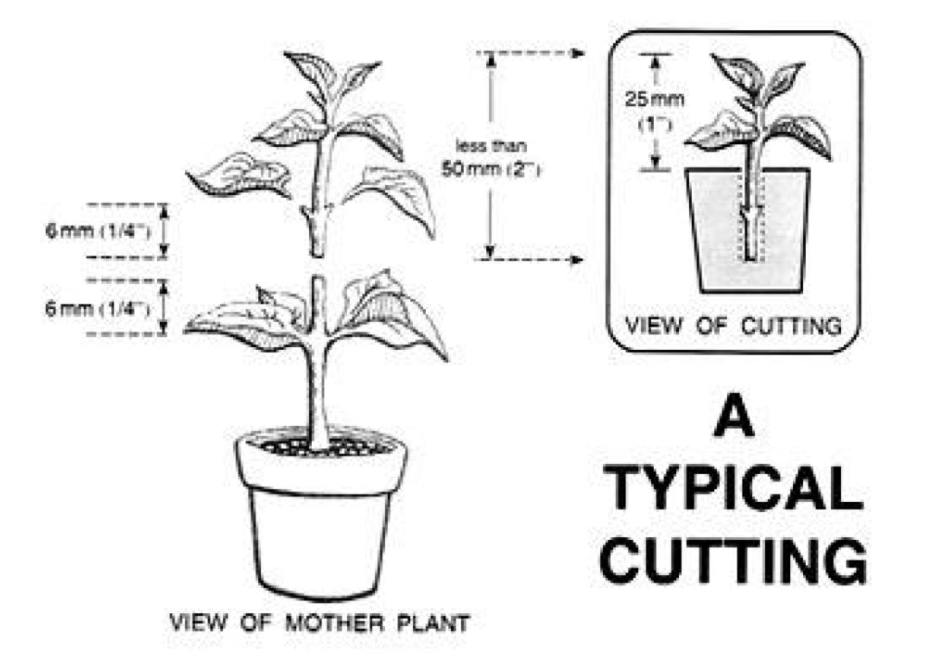 A Quick Guide On Vegetative Propagation And How To Make