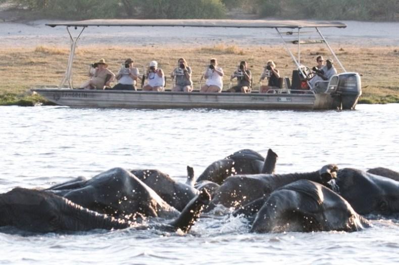 Leaflove Safari hat Fotografen-freundliche Boote, mit denen man mit Stativ auf den Gewässern des tierreichen Chobe die Tierwelt beobachten und fotografieren kann.