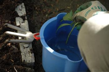 Dip stem in water