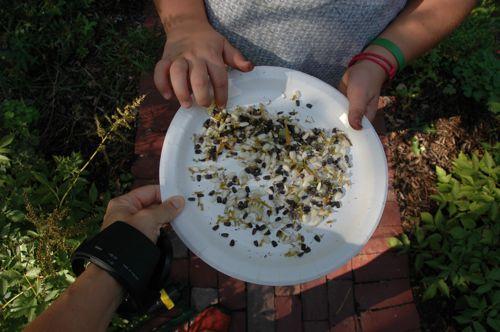 Harvest_seeds on plate