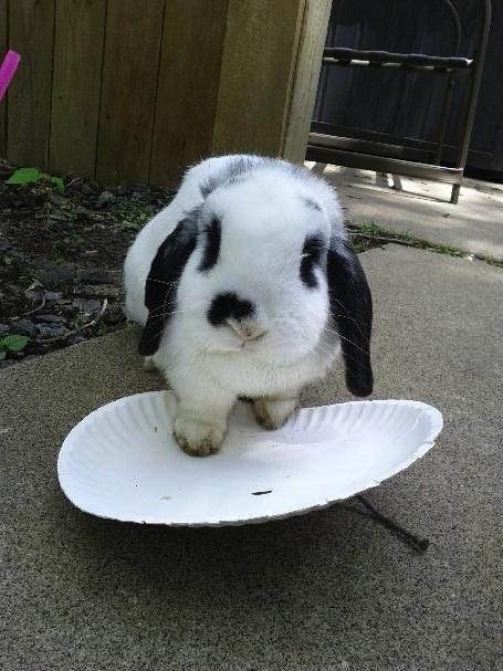 Killer the bunny