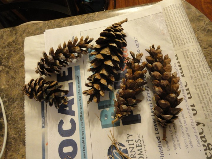 DIY wax pinecone fire starters