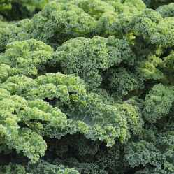 For this recipe I use Curly Kale