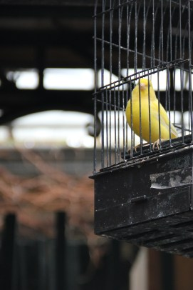 Paris   un autre oiseau