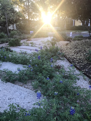 morning sunshine lights a pathway in Austin surrounded by flowering bluebonnets