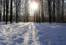 Photo Sun Through Trees With Snow