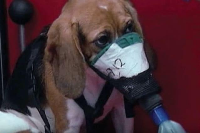 farmaco anti cancro non testato su animali
