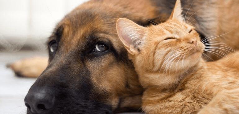 """MALTRATTAMENTO ANIMALI: PROROGA PORGETTO """"PREVENZIONE E CONTRASTO"""""""
