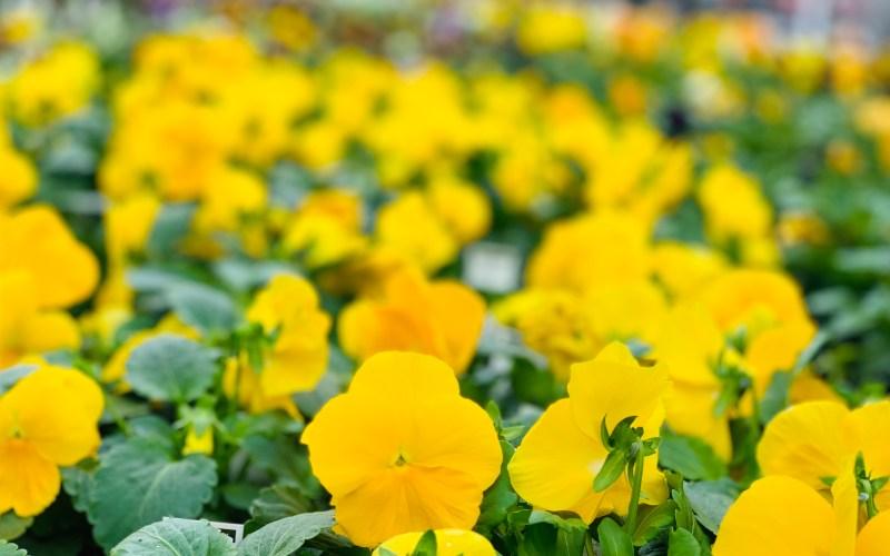 Be like a Gardener/Farmer