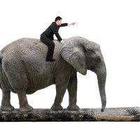Behavior Change - The Elephant in the Room