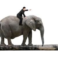 Behavior Change - The Elephant in the Room