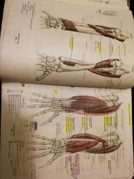 Anatomy (1/2 a class)