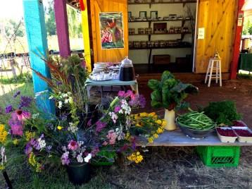 The herbal medicine shop