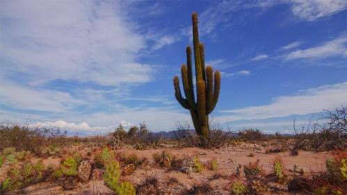Cactus, tunas y nubes