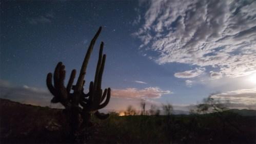 Cactus y estrellas