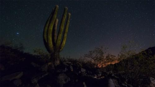 Cactus y piedras