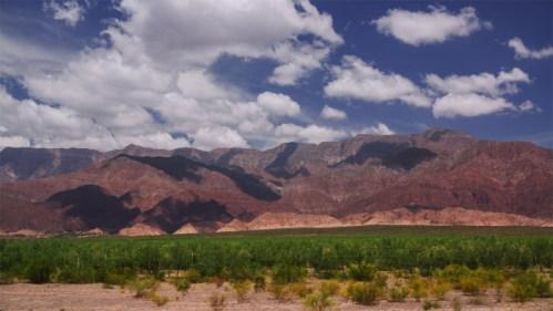 Plantación de olivos y nubes